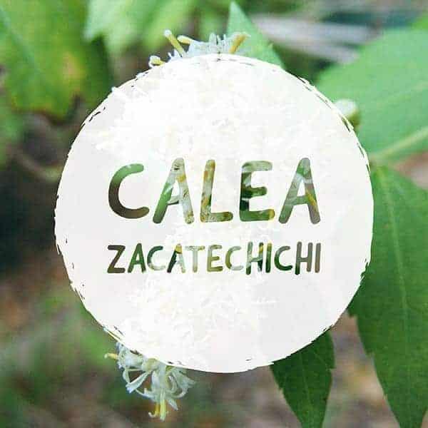 CALEA ZACATECHICHI VAPORIZE 1 1