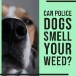 CAN POLICE DOGS SMELL YOUR WEED STASH 1 1
