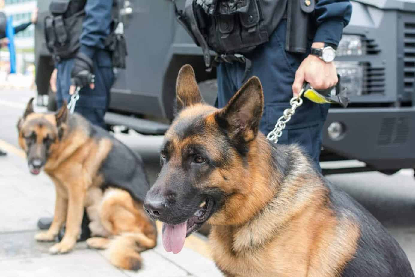 CAN SNIFFER DOGS FIND YOUR CANNABIS VAPORIZER 1 1