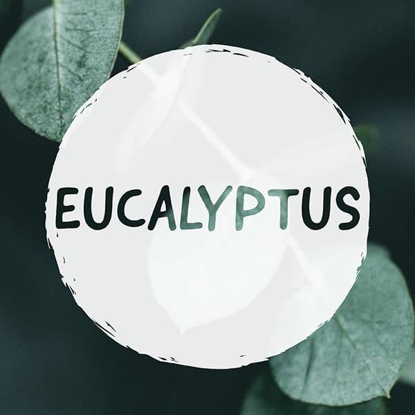 CAN YOU VAPE EUCALYPTUS