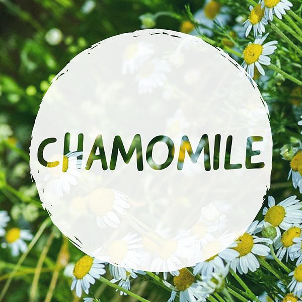 CAN YOU VAPE CHAMOMILE HERBS