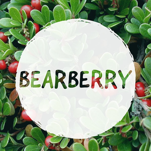CAN YOU VAPORIZE BEARBERRY