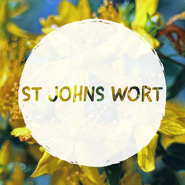 HOW TO VAPORIZER ST JOHNS WORT