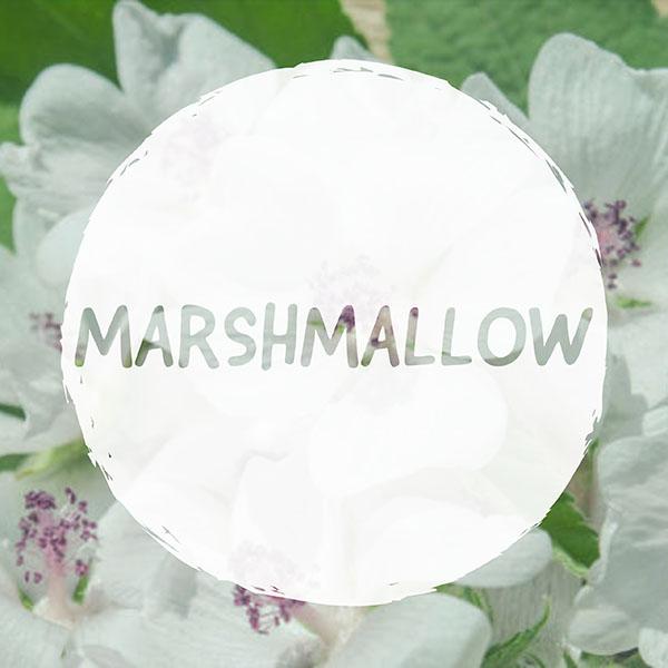 VAPING MARSHMALLOW LEAF