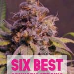 6 BEST CANNABIS STRAINS FOR VAPING 1 1