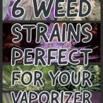 6 PERFECT WEED STRAINS FOR YOUR CANNABIS VAPORIZER 1 1